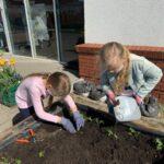 Dziewczynka w różowej bluzie sadzi rośliny. Obok stoi dziewczynka w dżinsowej kurtce i podlewa rośliny.